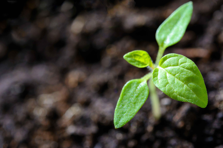 fresh growth seadling